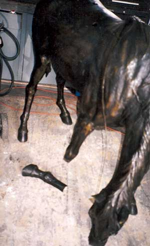 Bronze Pony with Broken Leg